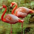 sites/default/files/styles/125px_square/public/InTheNews/_96180661_z8240029-greater_flamingoes_phoenicopterus_ruber_-spl.jpg